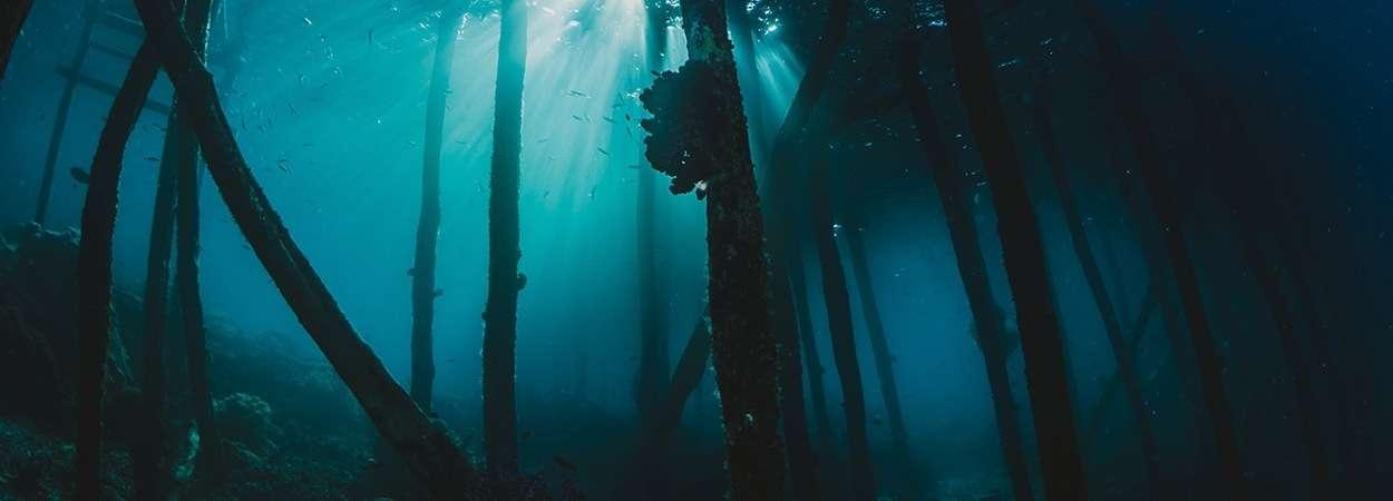 iniciacion submarinismo apaisada