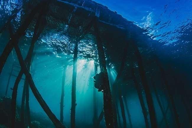 iniciacion submarinismo destacada